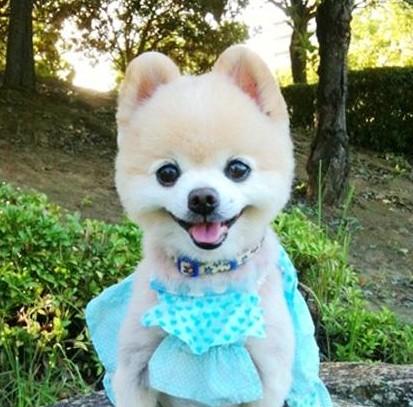 萌小狗图片大全可爱